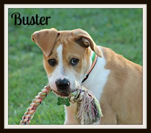 Buster (1)cvr.jpg