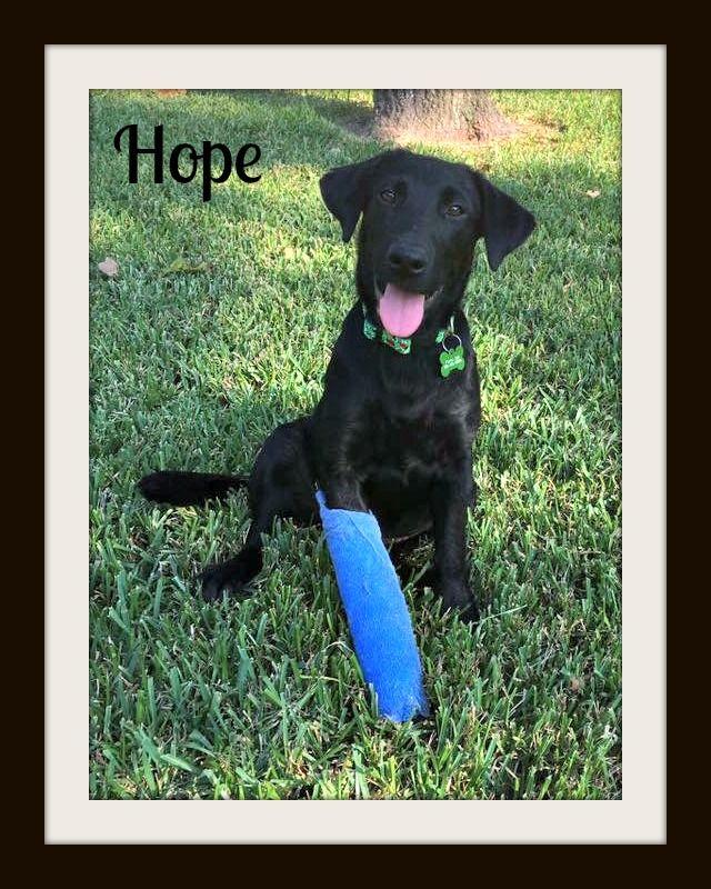 Hope9-10cvr.jpg