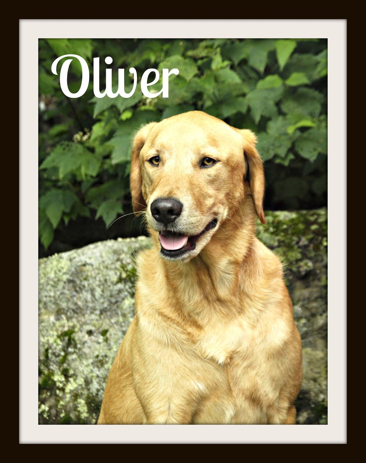 Oliver2cvr.jpg