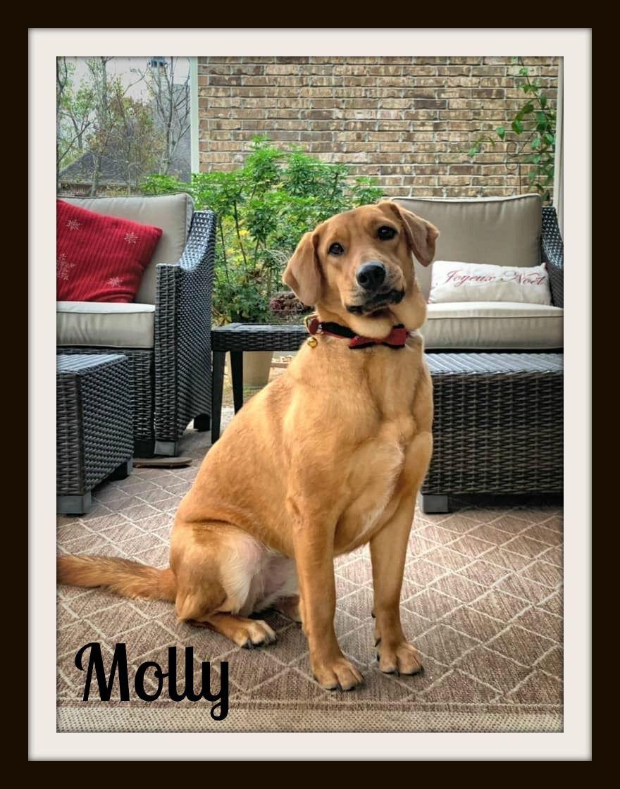 Molly (11).jpg
