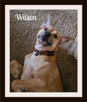Wilson1 (2).jpg