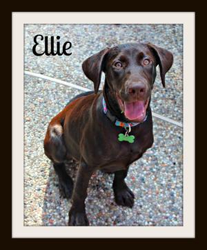 Ellie8-3-15cvr.jpg