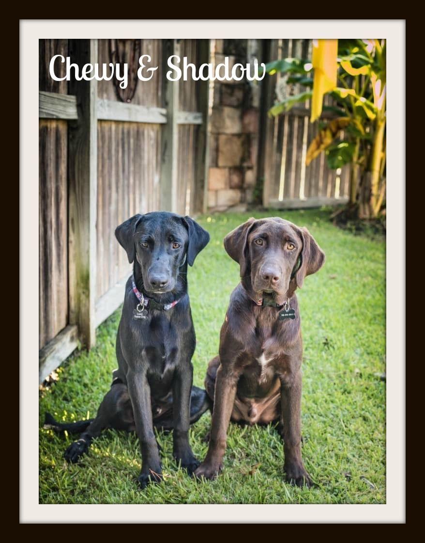 Chewy-Shadow3cvr.jpg