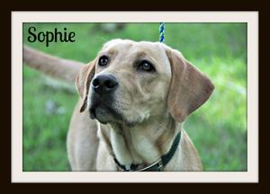 0236 Sophie 6-13.jpg