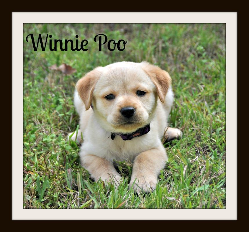 0542 Winnie 3-14cvr.jpg