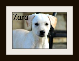 Zara9-14cvr.jpg