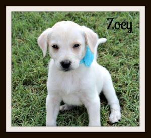 Zoeycvr.jpg