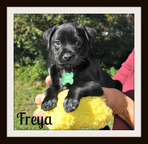 Freya1a.jpg