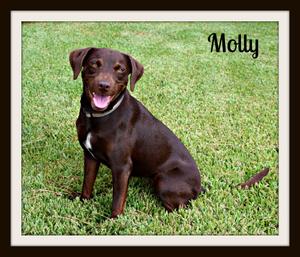 Molly sit look-cvr.jpg