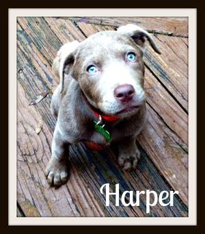 Harper deck pretty eyes-1.jpg