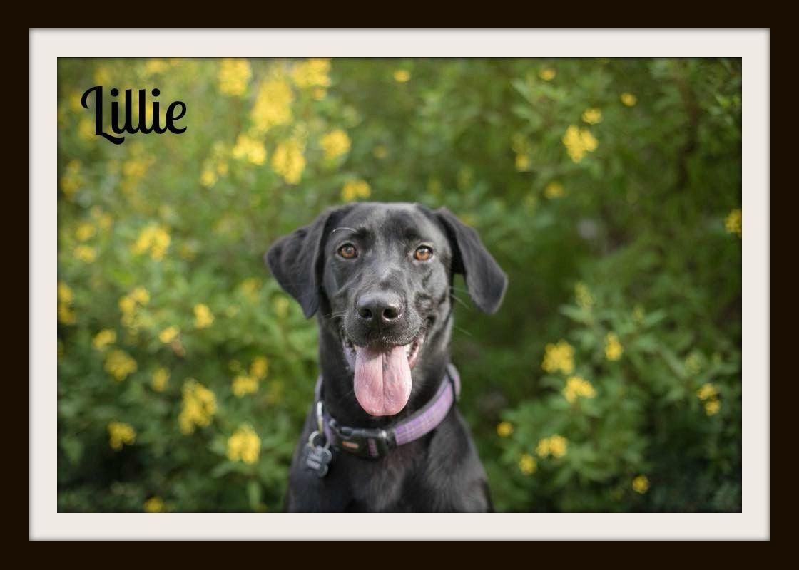 Lillie 10-10cvr.jpg