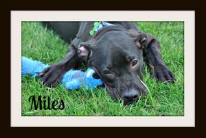 Miles (18).jpg