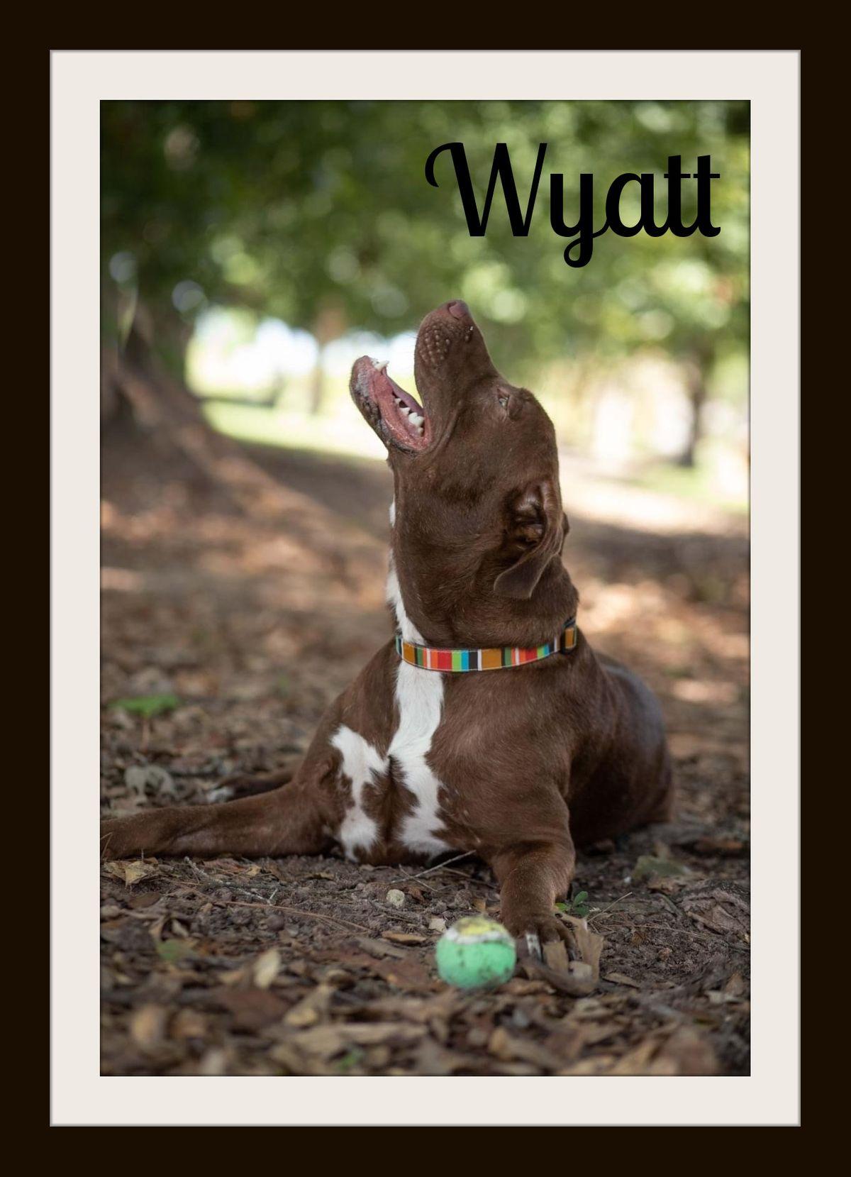 Wyatt3.jpg
