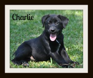 0064 charlie 5-13 (2).jpg
