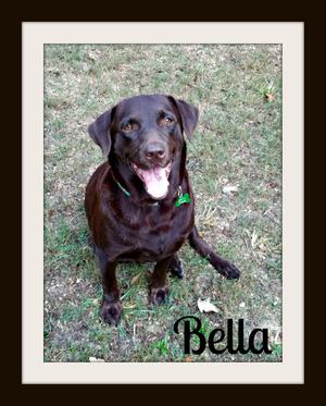 Bella-cvr.jpg