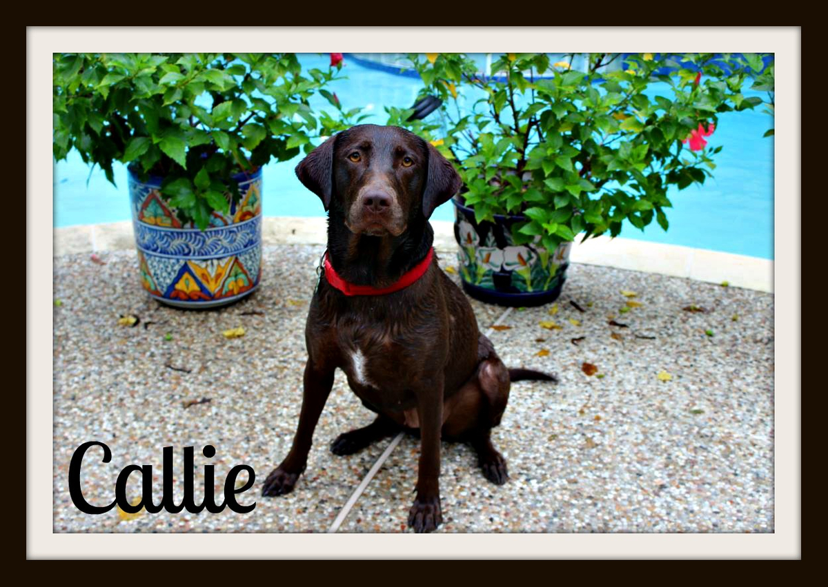 Callie sit plants_crop-1.jpg