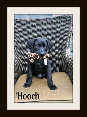 Hooch (5)cvr.jpg