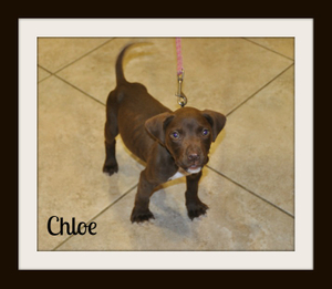 Chloe1cvr.jpg