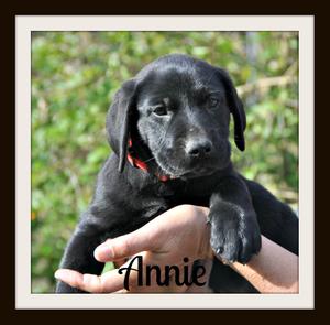 0245 Annie 1-14-1.jpg