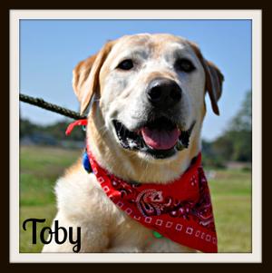 Toby-frame.jpg