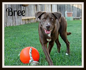 Bree (4)cvr.jpg