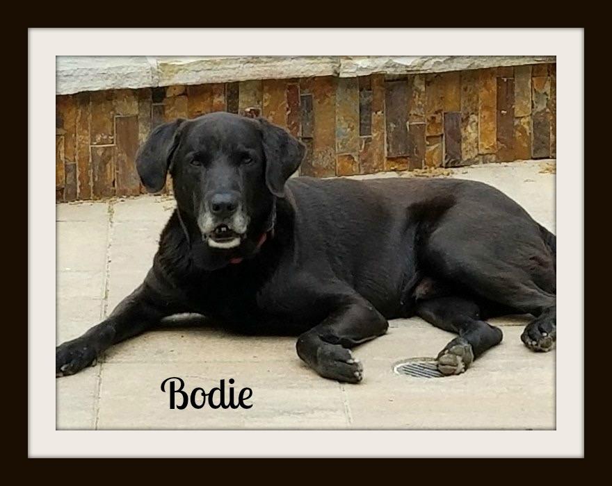 Bodie-cvr.jpg