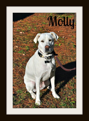 Molly (1)cvr.jpg
