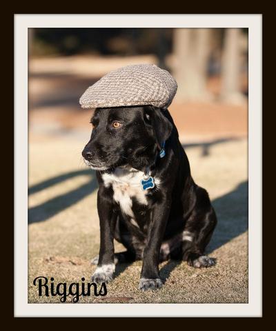 Riggins2-10-4cvr.jpg