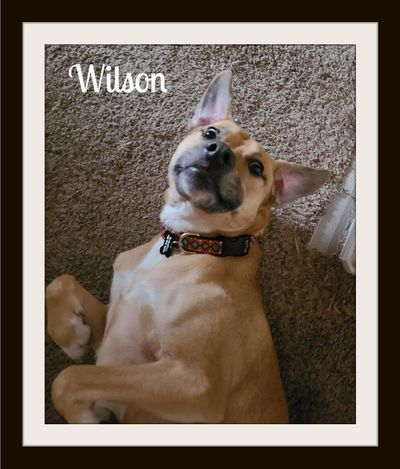 Wilson1.jpg
