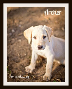 Archer9-12cvr.jpg