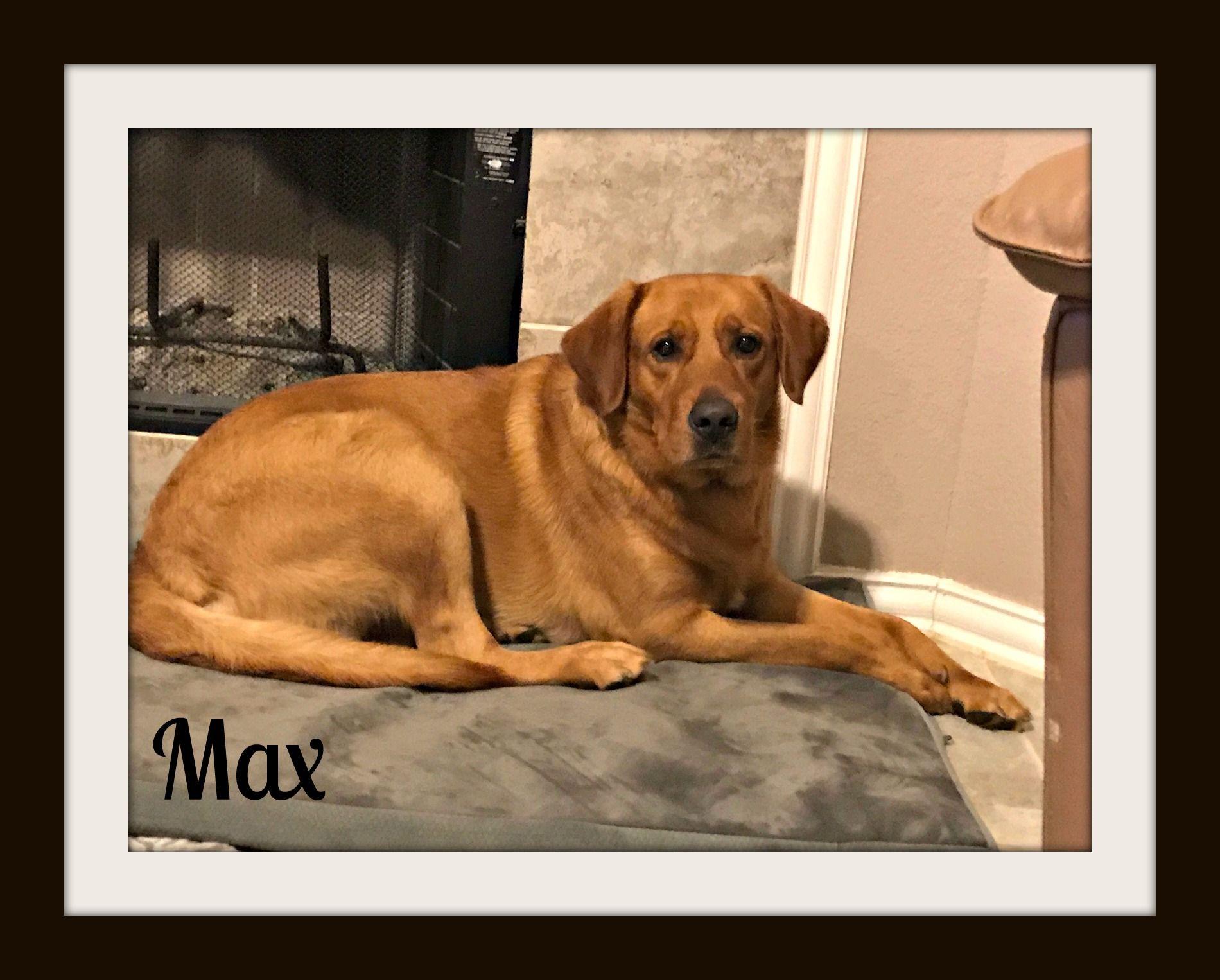 Max (1)cvr.jpg