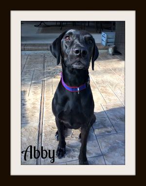 Abby (1)cvr.jpg