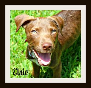 Elsie (5)cvr.jpg