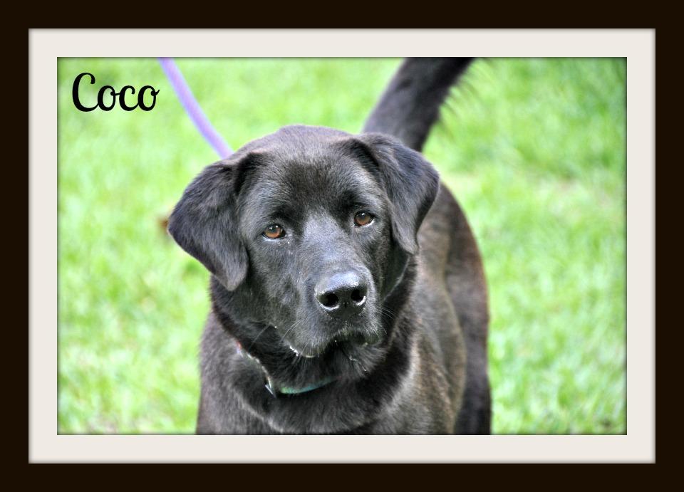 Coco (4).jpg