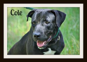 Cole (5).jpg