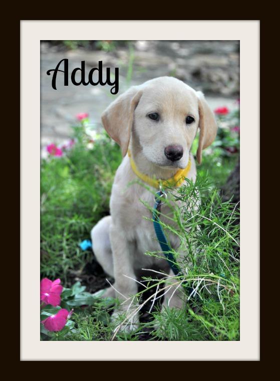 Addy-1.jpg