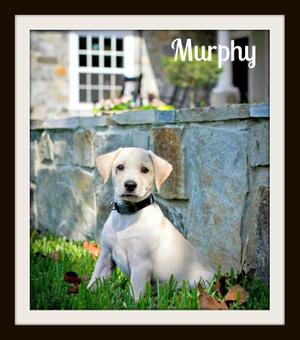 Murphy8-30-2cvr.jpg