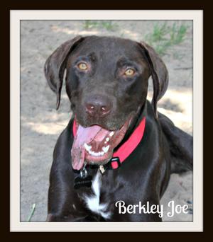 Berkley Joe1cvr.jpg