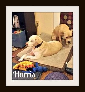 Harris-cvr.jpg