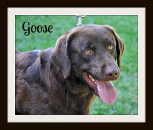 0310 Goose 5-14cvr.jpg