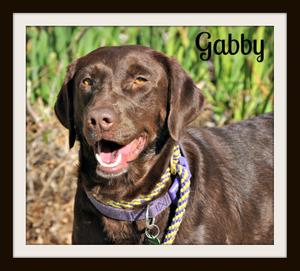Gabby (6).jpg