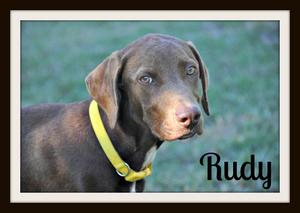 Rudy-cvr.jpg