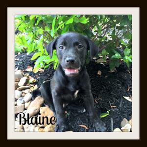 Blaine1cvr.jpg