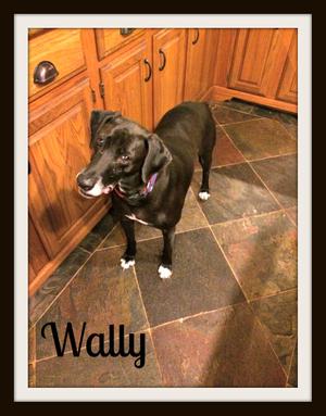 Wally-cvr (2).jpg