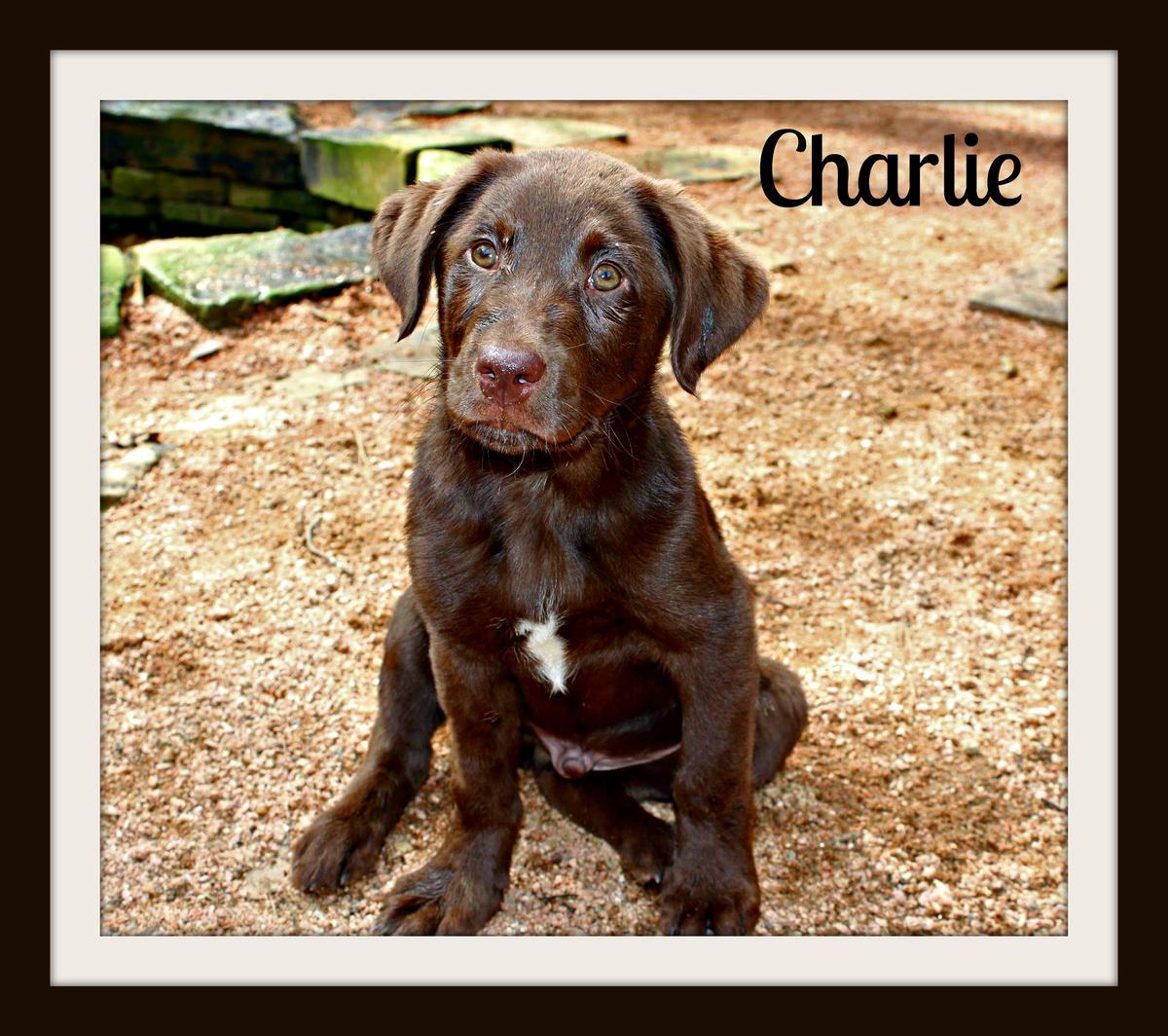 CharlieB3cvr.jpg