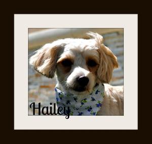 Hailey1a.jpg