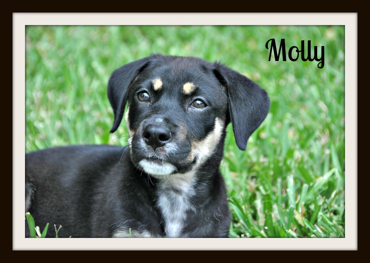 Molly (1).jpg