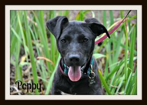 Poppy (7).jpg