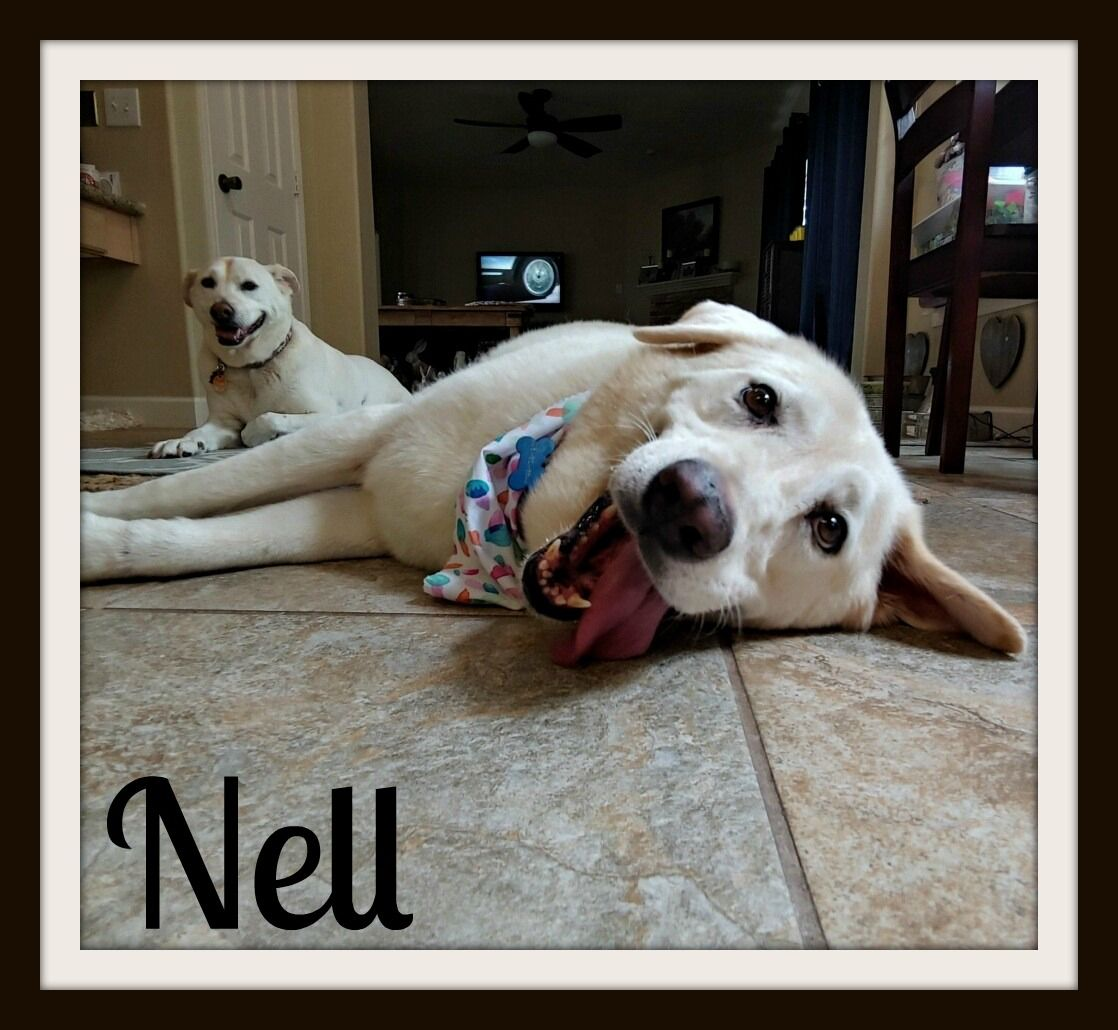 Nelly Bean - Nell1-cvr.jpg