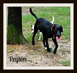 Peyton-cvr.jpg